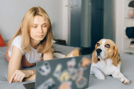 El permiso laboral para cuidar a las mascotas que la Gen Z hará realidad fijo, porque el futuro working es peludito
