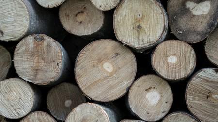 Científicos descubren cómo convertir cualquier madera en un material tan resistente como el acero