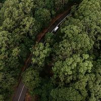 Plantar 1.000 millones de árboles: el plan de Australia para neutralizar sus emisiones de CO2