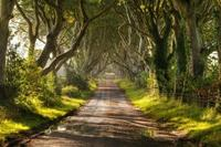 The Dark Hedges: visita uno de los escenarios más aterradores de 'Juego de Tronos' en Irlanda