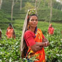 Los retos adicionales de lanzar un chatbot de asistencia en un país como la India