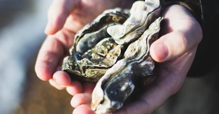 Ostras al rescate: reciclar sus conchas puede ser la clave para regenerar los debilitados arrecifes