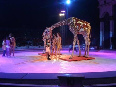 Un legislador de Morena quiere que los animales vuelvan a los circos en México, presentará iniciativa