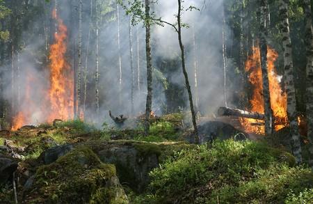 Amazonas Fire