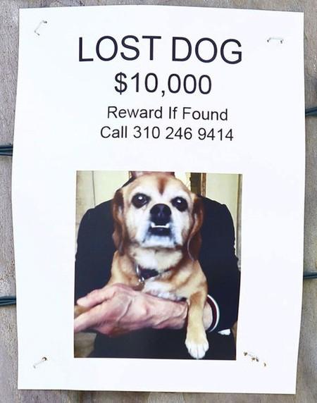 Adivina quién... ofrece hasta 10.000 dólares de rescate por su mascota