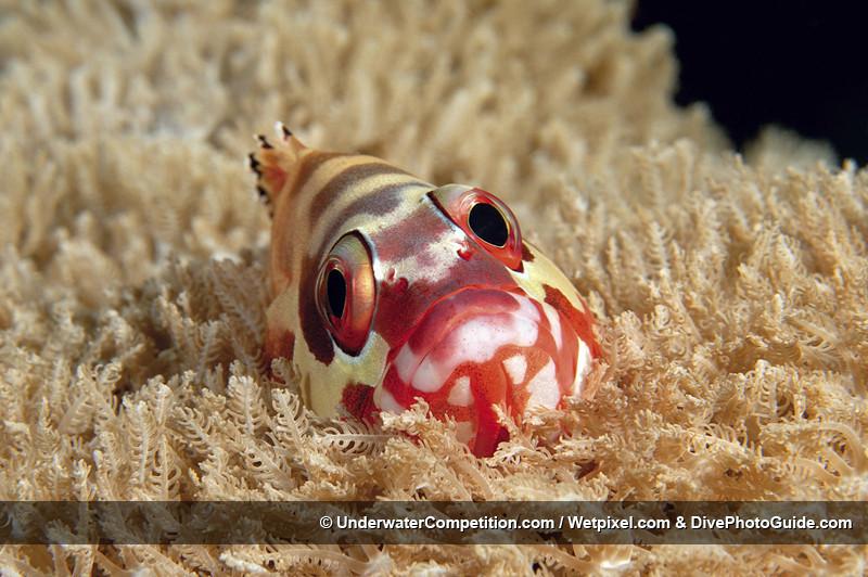 Foto de Underwater competition (19/34)