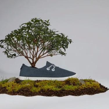 Las deportivas más cómodas del mundo dan un paso adelante y ahora están hechas... ¡con árboles!