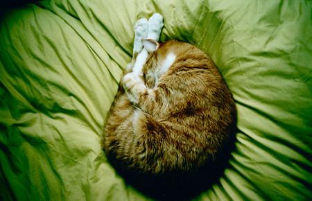La importancia de cambiar las sábanas regularmente