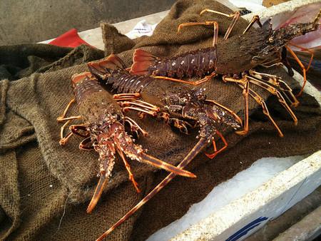 Turismo responsable: guía mundial para el consumo de pescados y mariscos