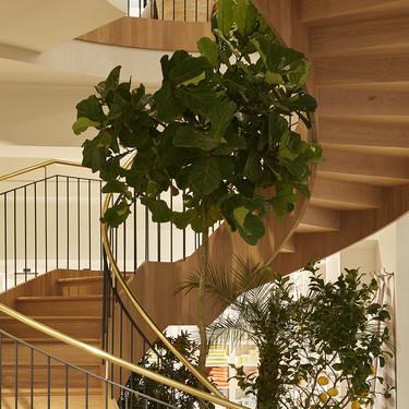 Tendencias en plantas de interior; es el turno del Ficus Lyrata o la Higuera hoja de lira y una paisajista nos da las claves para mantenerlo bonito