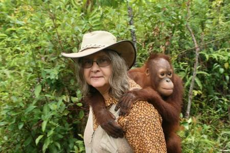 birute-galdikas-orangutan