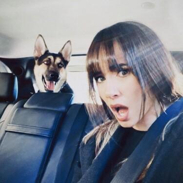 Si estás planeando pasar las vacaciones con tu perro, así está la normativa de admisión de animales de compañía en lugares públicos y privados