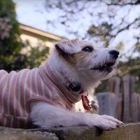 Trailer de 'Dogs', el documental de Netflix que explorará la relación íntima entre humanos y perros