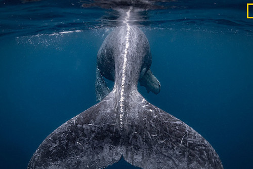 Estas son las imágenes ganadoras del certamen National Geographic Travel Photographer of the Year 2018