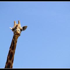 Foto 2 de 5 de la galería animales en Xataka Foto