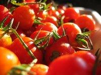 La supervivencia del tomate