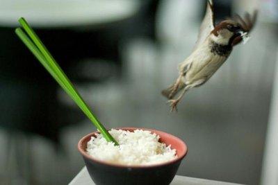 Cocina ligera en verano: ensalada de arroz