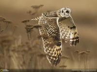 Las mejores fotografías del National Geographic Photo Contest 2014
