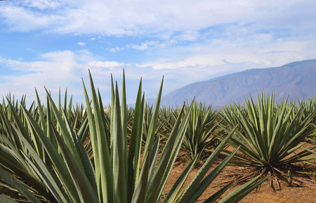 Sky Mountain Hill Green Maguey Agave 1427551 Pxhere Com