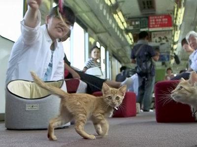 Japón ha inaugurado el primer tren con un café gatuno porque el mundo lo necesitaba (aunque no lo supiera)