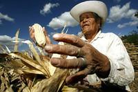 La catastrófica subida de precio de los alimentos