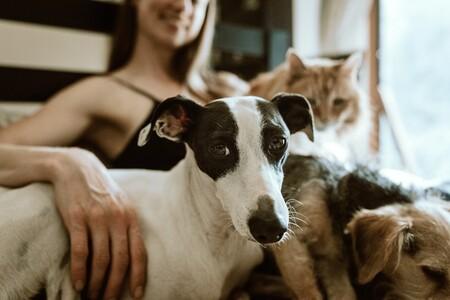 Desde las horas que podemos dejar sola a nuestra mascota hasta cursos para dueños: así es la nueva Ley de protección animal