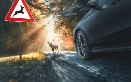 Atropellos de animales, un riesgo no solo en carreteras secundarias