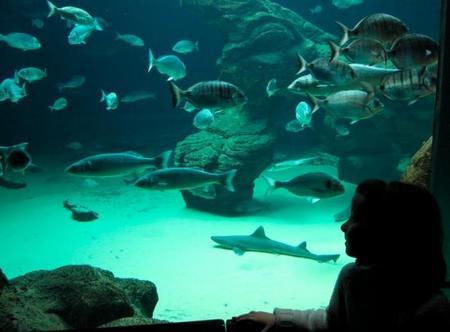 Visita con niños al Museo Marítimo del Cantábrico en Santander