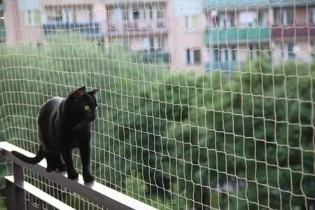 red gatos