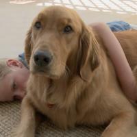 El poder sanador de las mascotas: la historia de un niño con autismo y su golden retriever