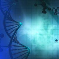 Ahora ya podemos editar células madre directamente en el cuerpo del paciente