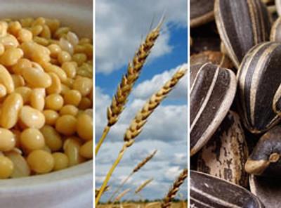 Consejos para incrementar la fibra en tu dieta