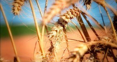 Las diez mejores prácticas para una Agricultura Sostenible (III)
