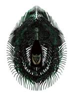 Dom Pérignon presenta Metamorphosis, el poder de la creación a través de la visión de Iris Van Herpen