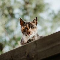 La epopeya no contada de cómo los gatos conquistaron el mundo y nos convirtieron en sus esbirros