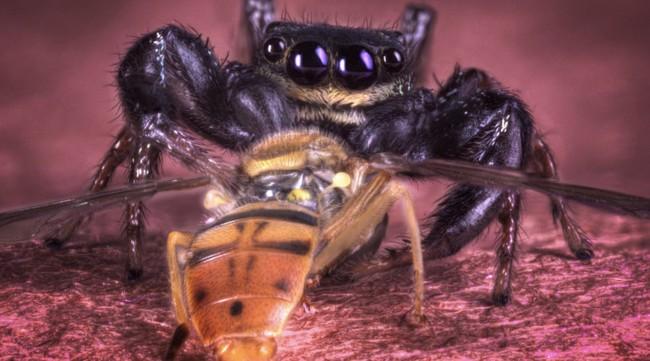 21 fotos de arañas devorando insectos son el recordatorio perfecto de la bellísima brutalidad del reino animal