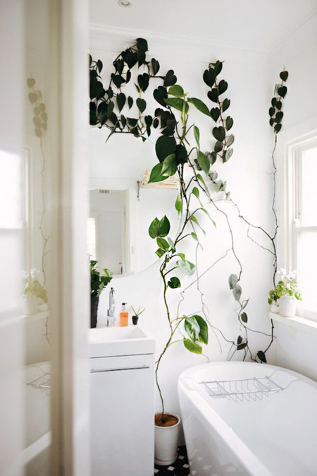 Minimal Plantas 1