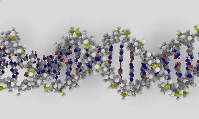 Un gen causante del enanismo