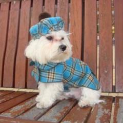 Foto 4 de 6 de la galería the-puppi-catwalk en Trendencias