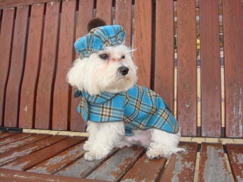 Foto de The Puppi Catwalk (4/6)