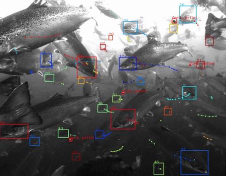 Google desarrolla un sistema de reconocimiento visual de peces para piscifactorías