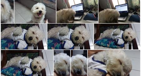 Google Fotos reconocerá a tus mascotas, y otros cambios en camino