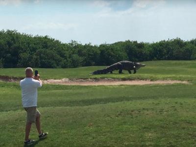 Por qué el caimán gigante del campo de golf de Florida podría ser tan real como falso