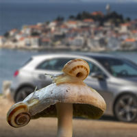 ¡Caracoles! Una plaga arruina el envío de 900 autos nuevos de Mercedes-Benz