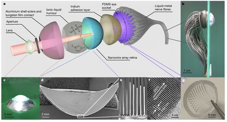 Ojo artificial: estructura y micrografías