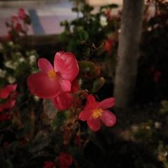 Foto 18 de 24 de la galería muestras-zenfone-3-deluxe en Xataka