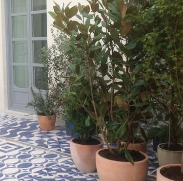 Cultivos decorativos en la terraza y el balcón ¡por fin llegó la primavera!