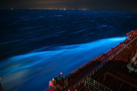 Bioluminescence 2