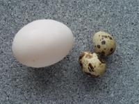 Los huevos y el mito del colesterol