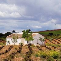 Por lo visto los amantes del vino ahora también tienen que saber de geología, pero ¿importa tanto el suelo?